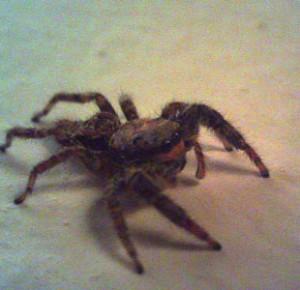20130401_旅写真クモ