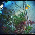 季節はずれの花