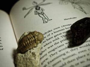 本の上に「文鎮」代わりに置いた三葉虫の化石