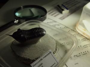 夜の机のモロッコニテス