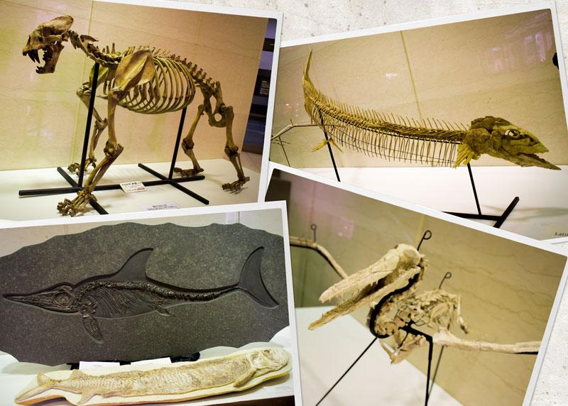 虎と魚と魚竜と歯のある鳥の化石